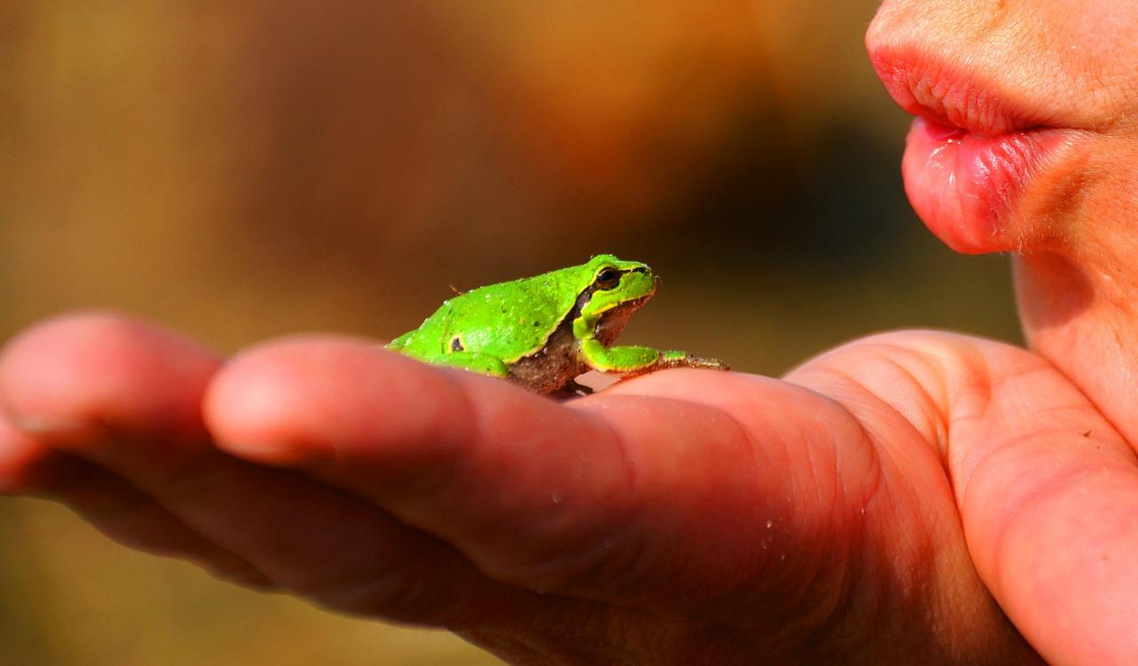 frog-prince-334970_1280.jpg