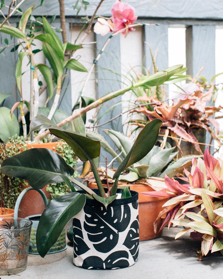 JanaLam+PlantSax_001.jpg