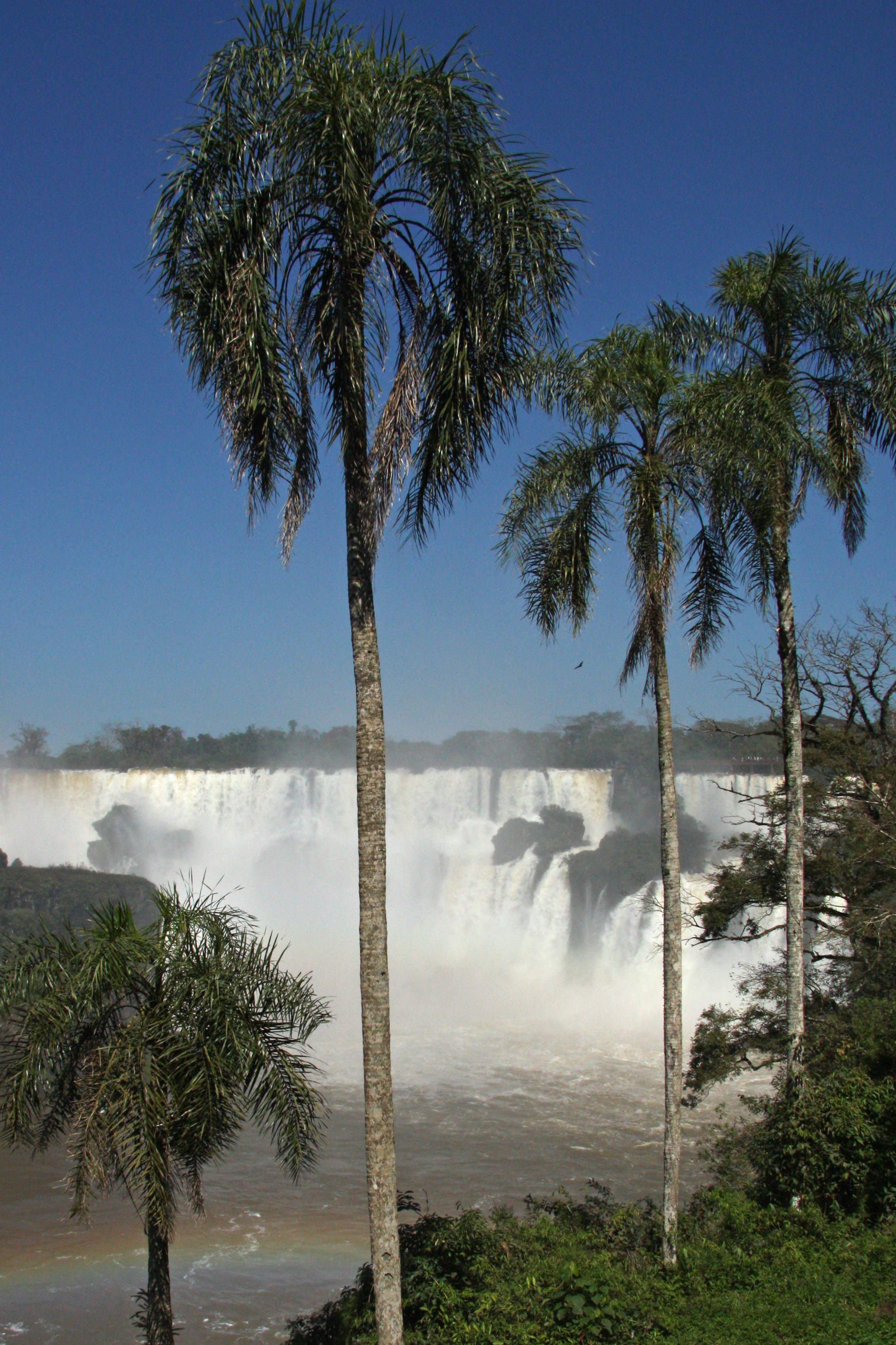 Iguazu Three Palms