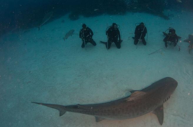 shark23.jpg