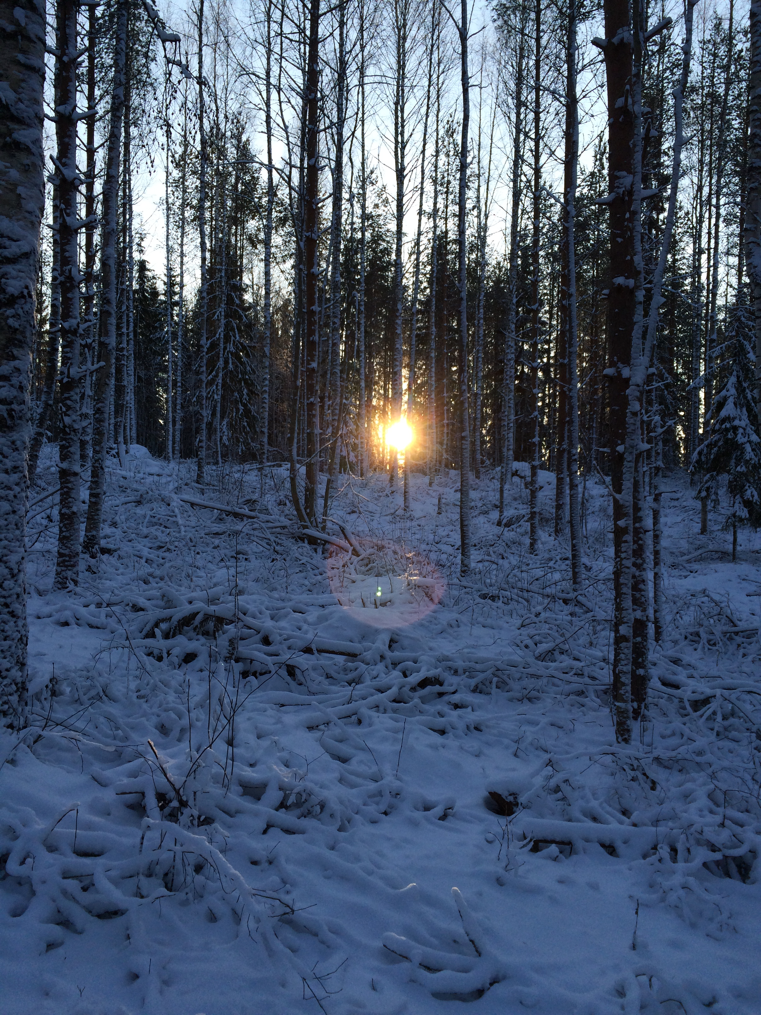Finland In Winter.png