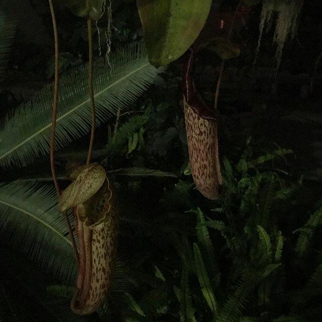 botanical B&E 🌱