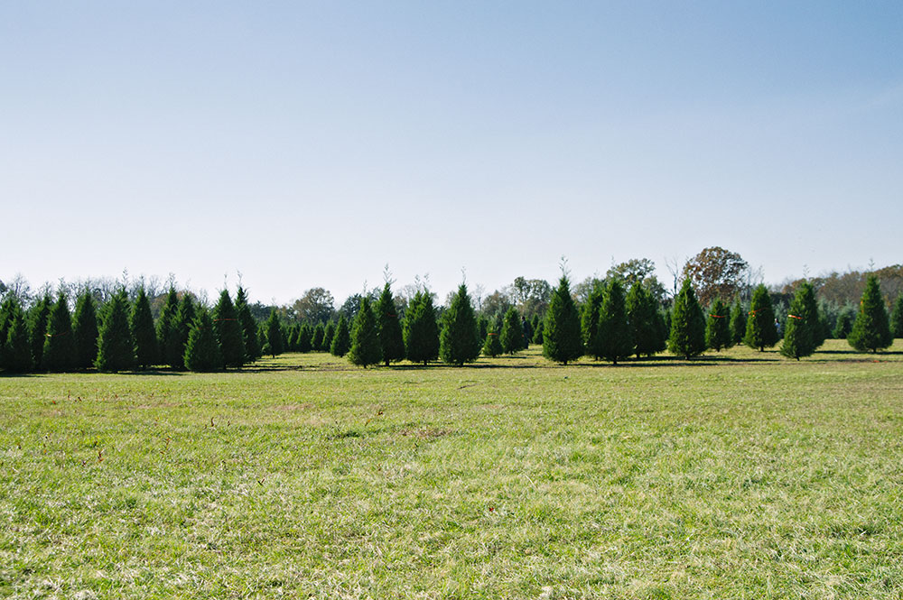 resized_trees_at_curry_Farms.jpg
