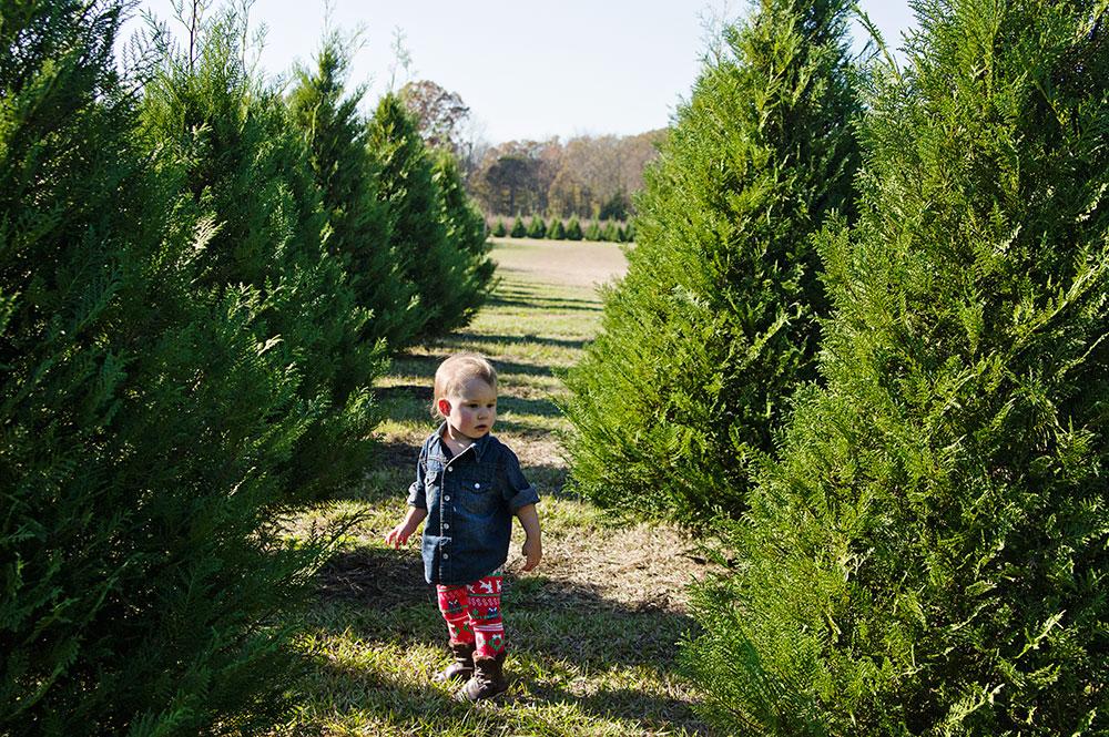 resizedlulah_in_the_trees.jpg
