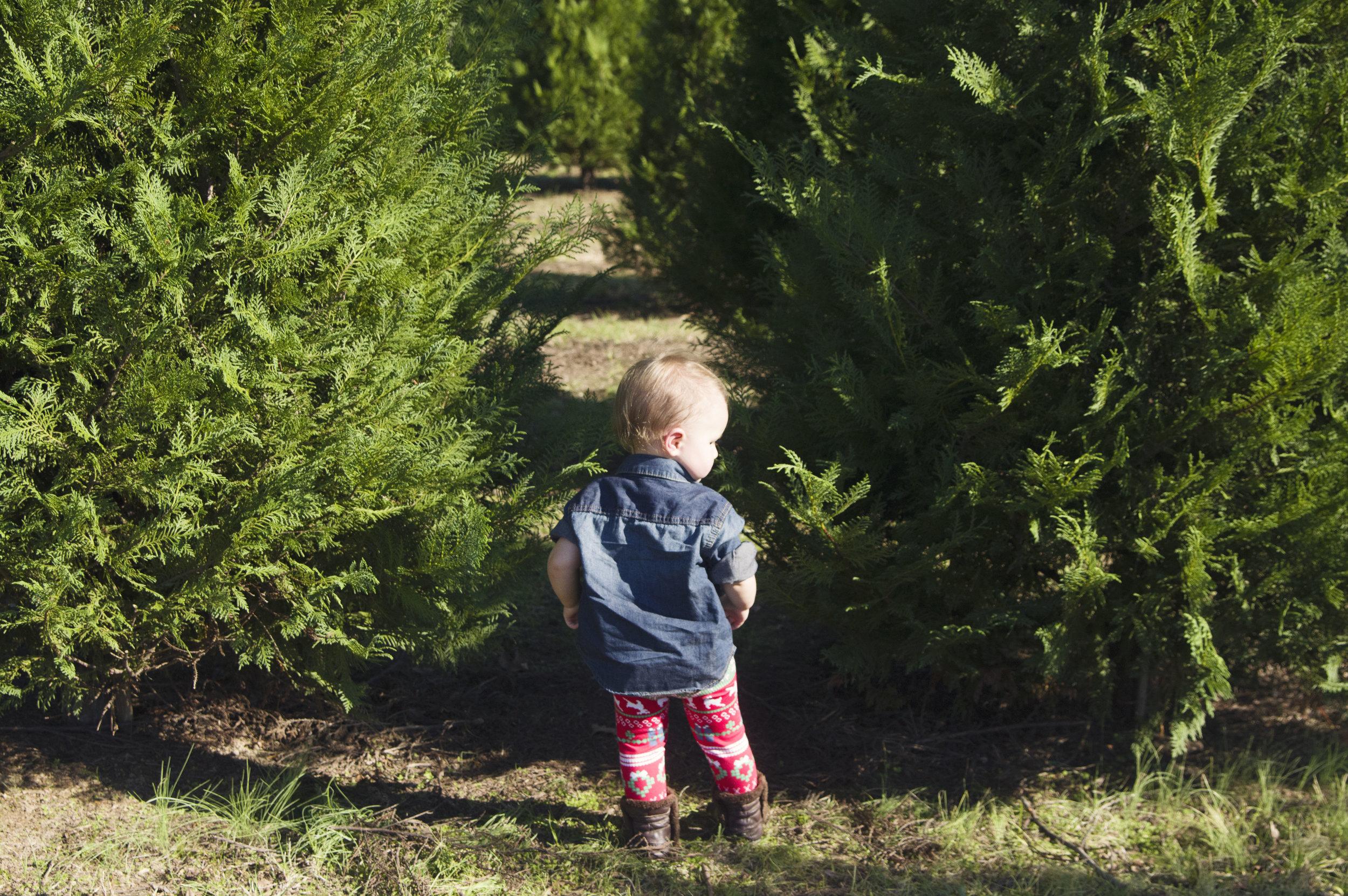 christmas_tree_farm_2015_001.jpg