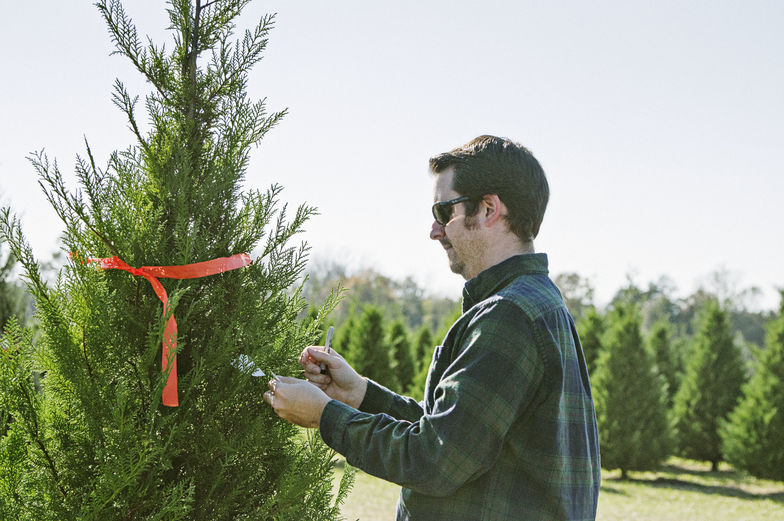 curry_farms_2015_tree_picking.jpg