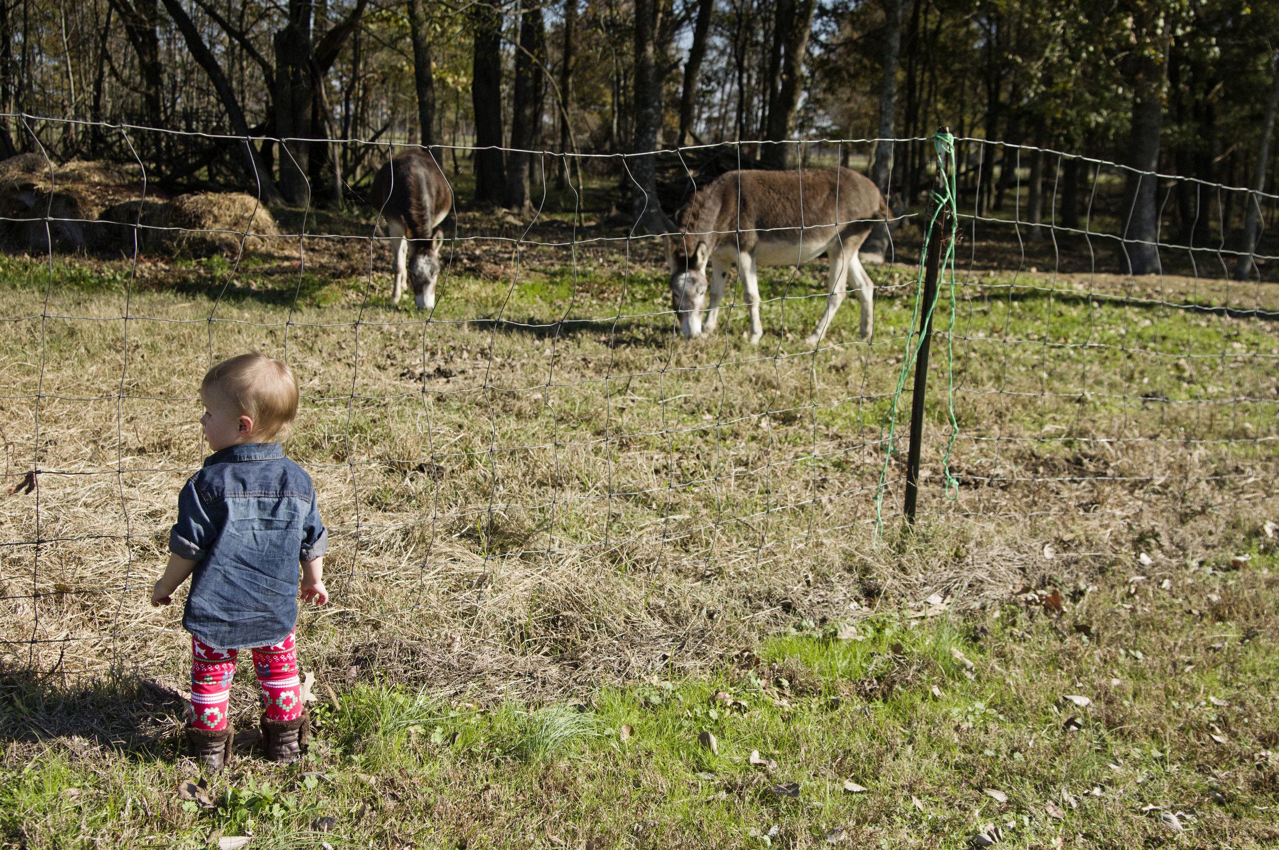 curry_farms_donkeys_2015.jpg