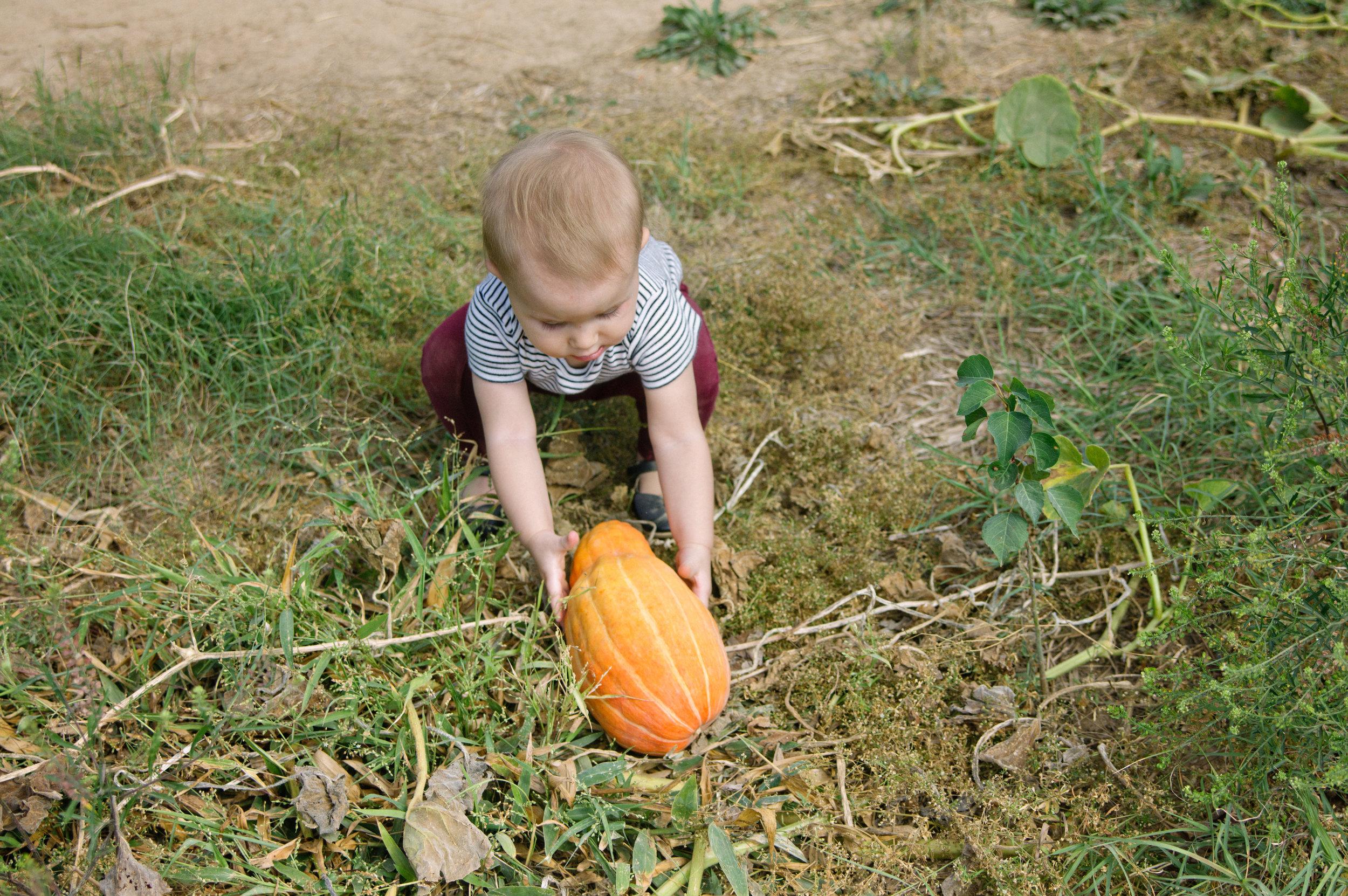 10_2015_tallulah_picks_pumpkins.jpg