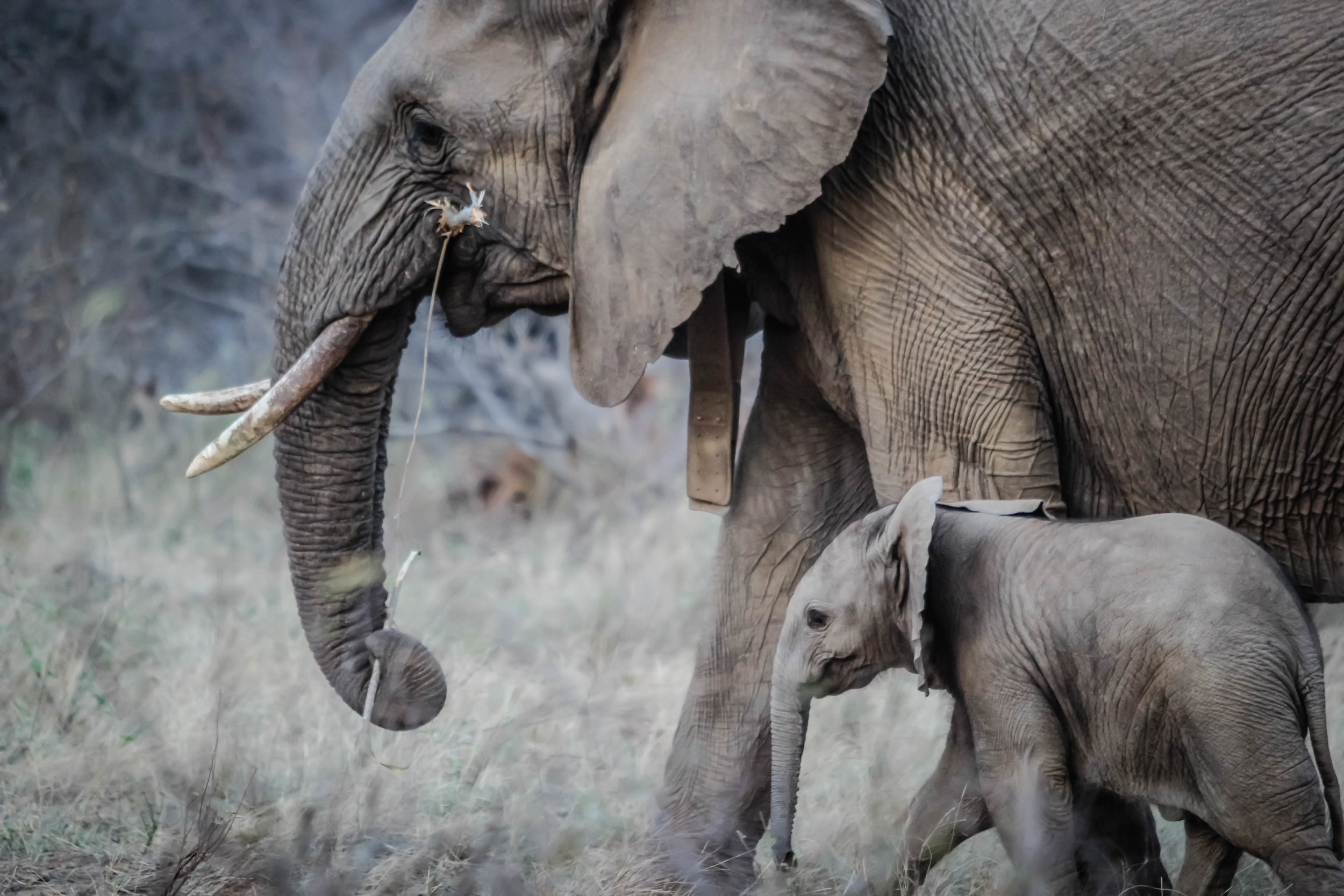 Getting the attention of big, slow corporations can be likened to catching an elephant by its tail.