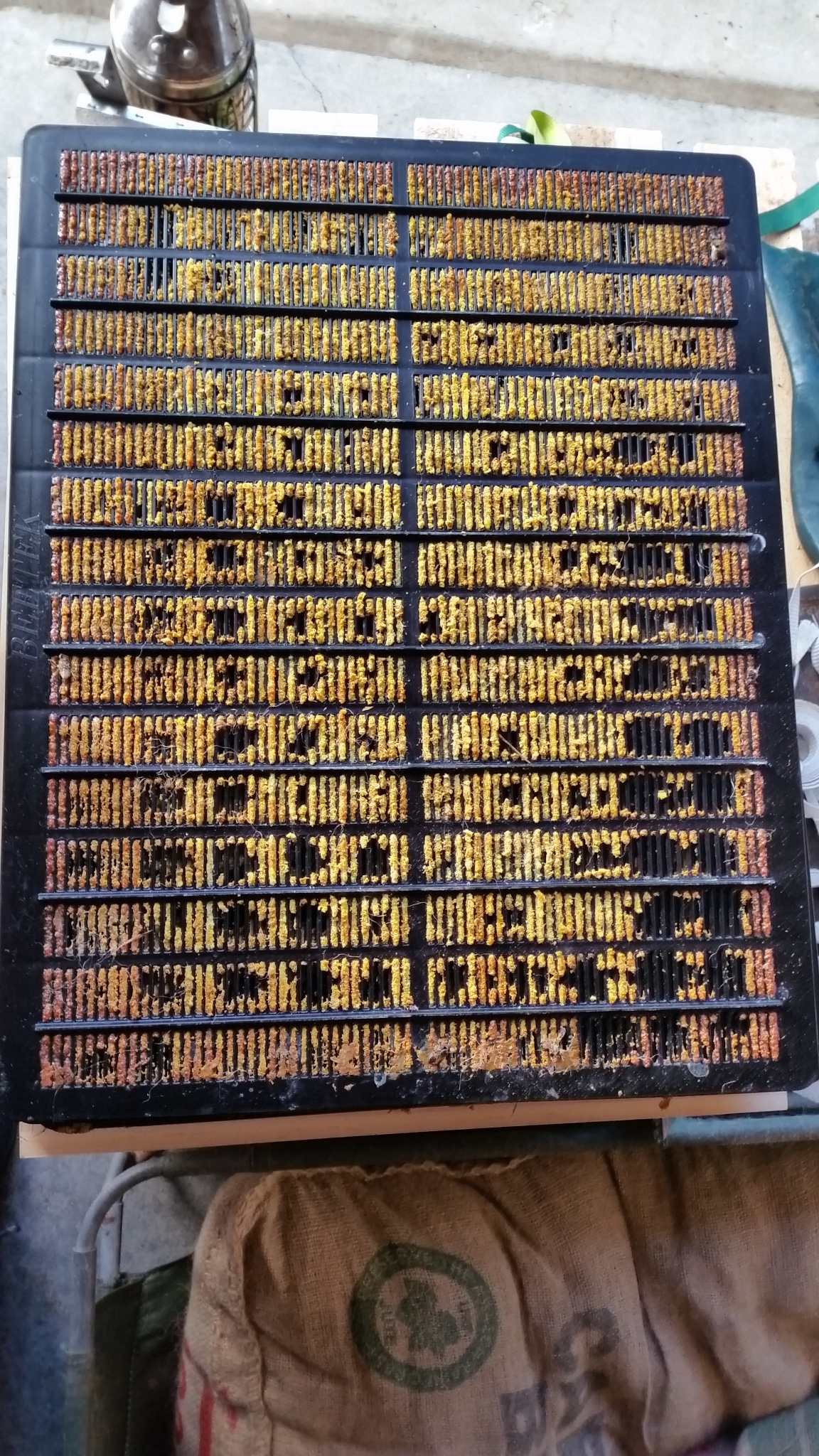 A beautiful full propolis mat