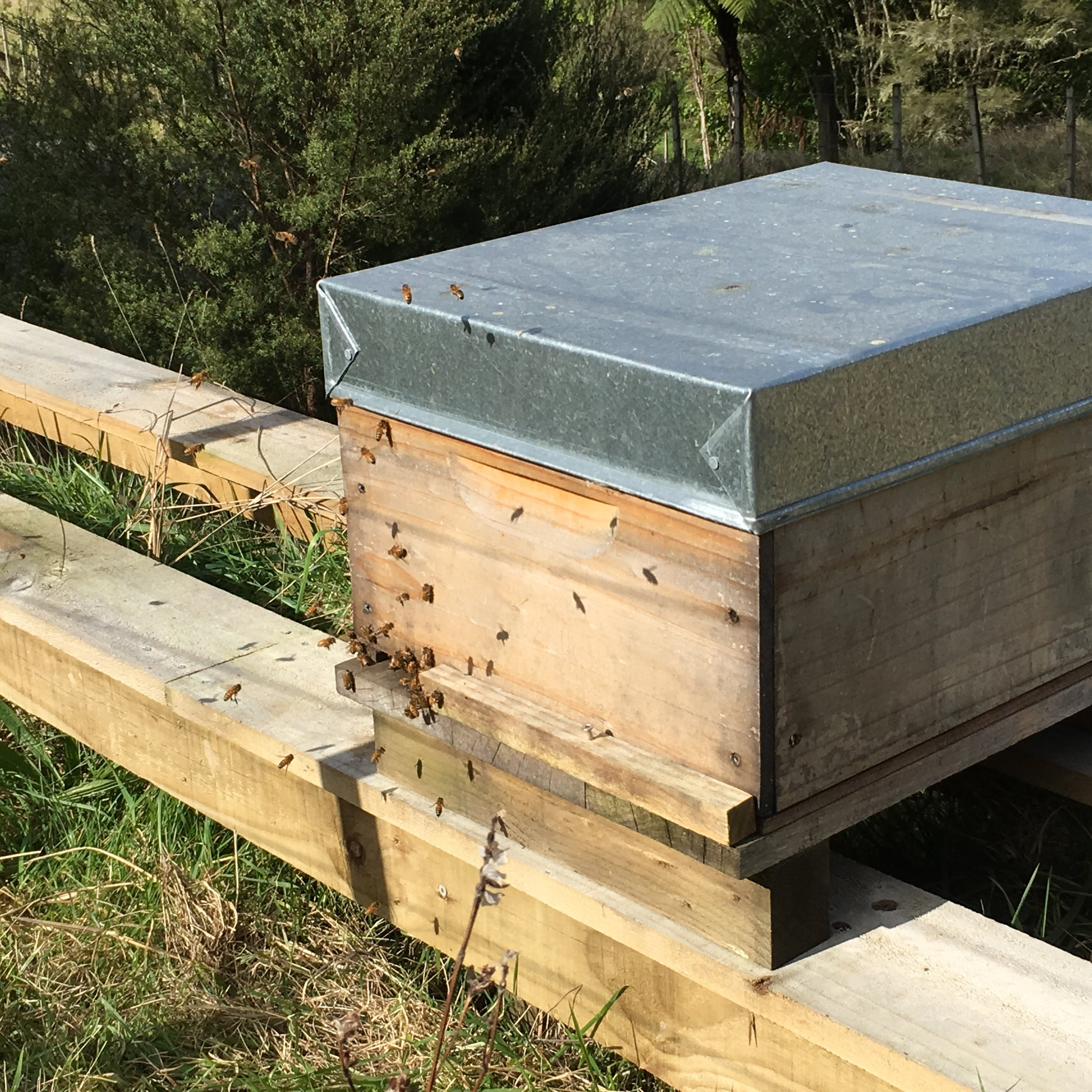 Bees coming out in early spring