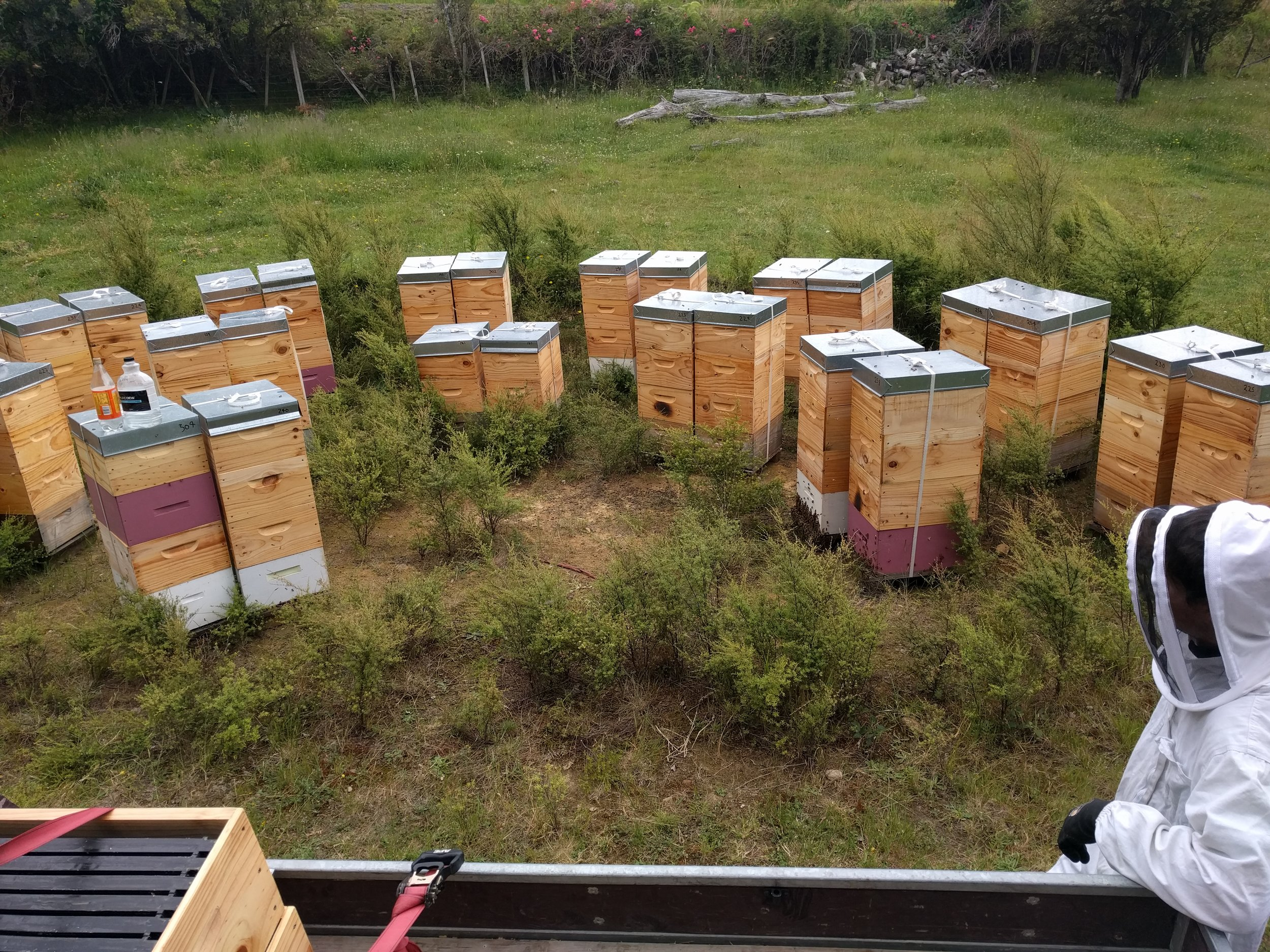 beehives full of honey