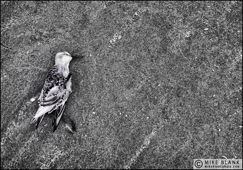 Bird, Lytham St Annes, England, 2010