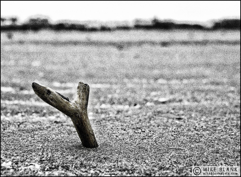Driftwood, Lytham St Annes, England, 2010