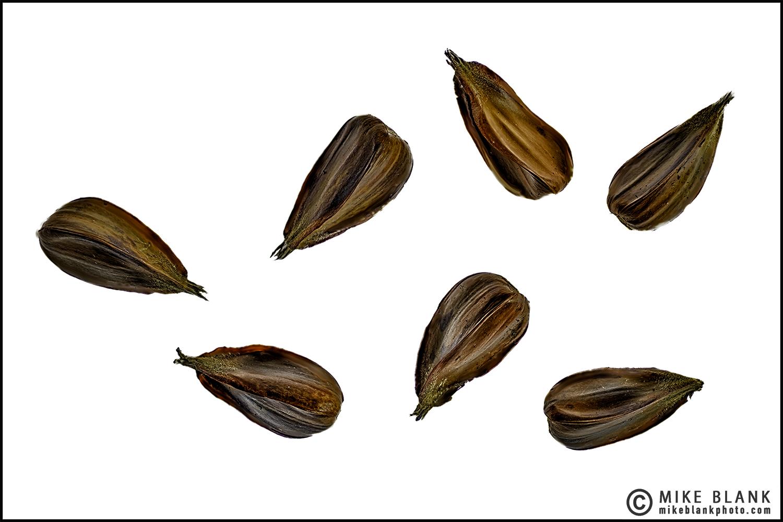 Beech Nuts 2016