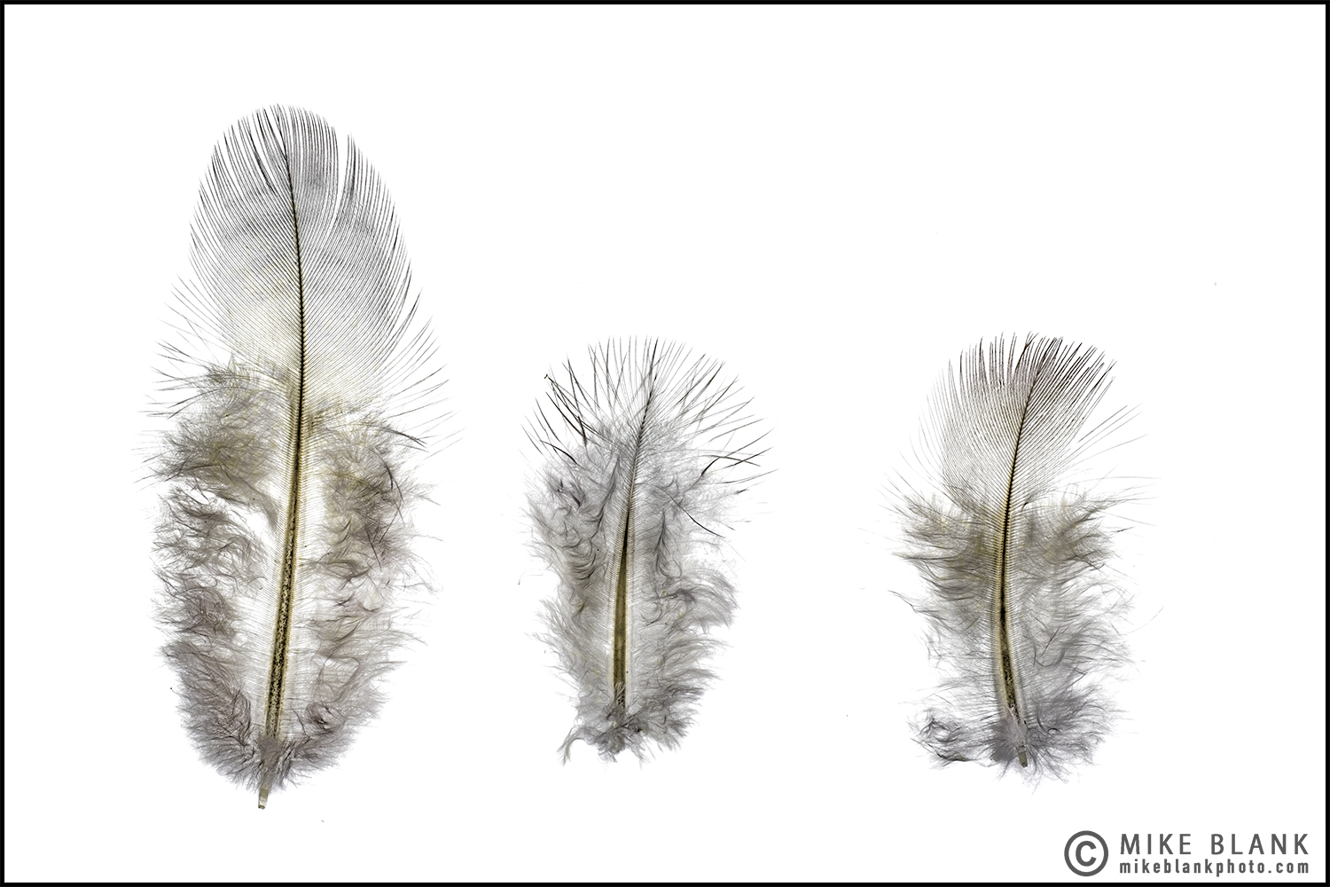 Feathers 2016