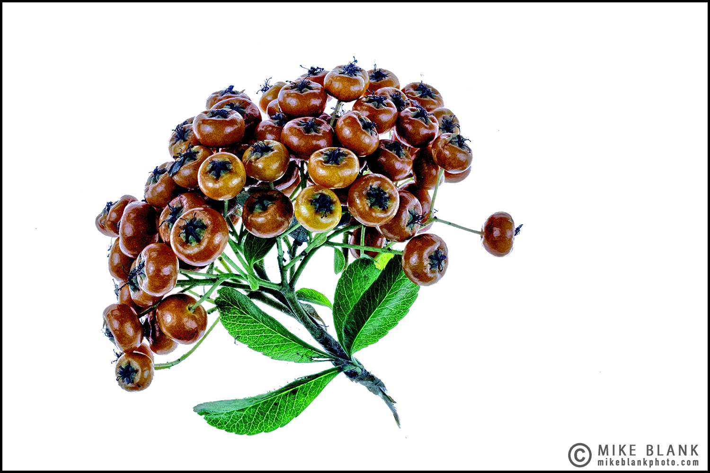 Winter berries 2016