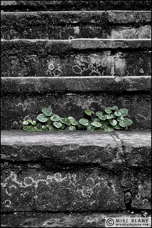 Steps, London 2016