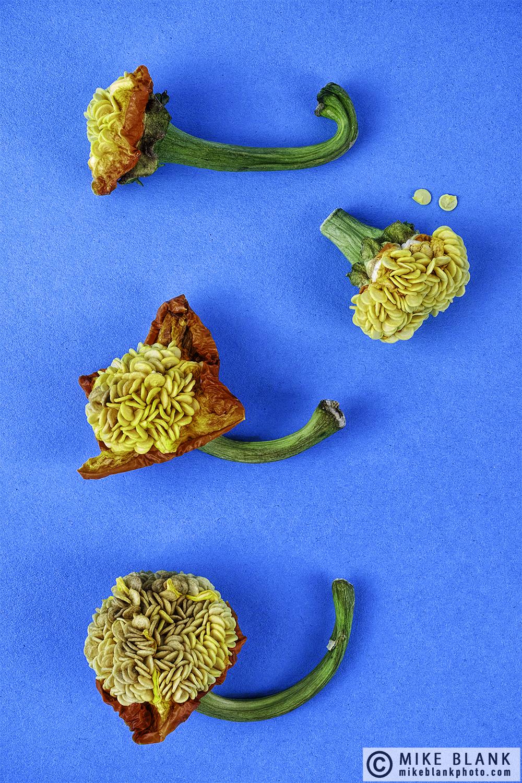 Sweet pepper seeds #6, 2017
