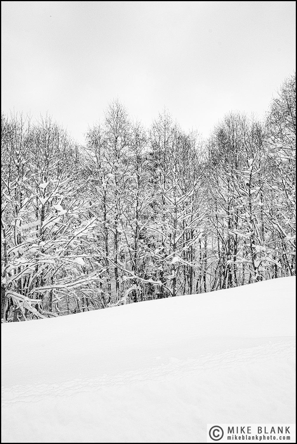 Snow trees sky, Megeve, 2017