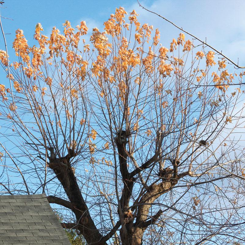 pruning-mistakes-problem4.jpg