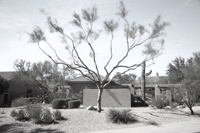 Image Source : Examples of improper tree pruning
