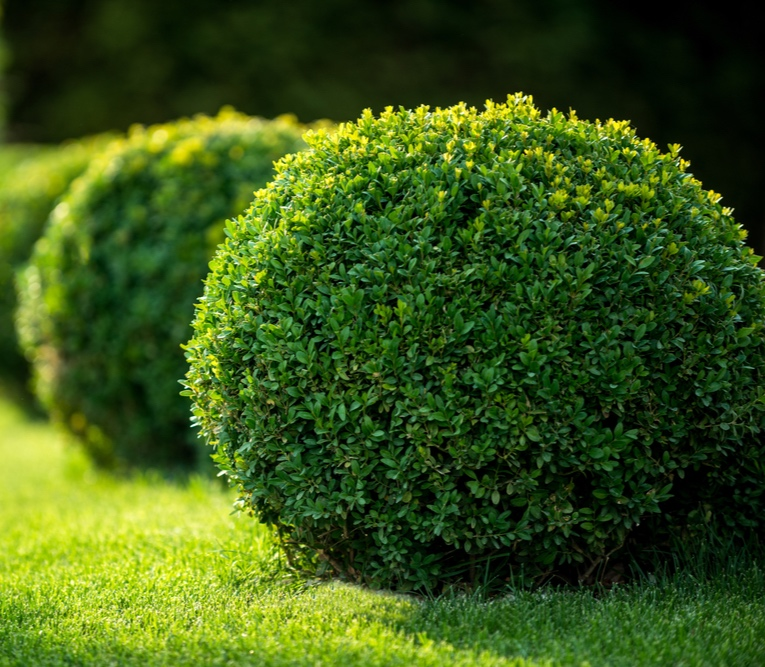 shrubs-chislehurst.jpg