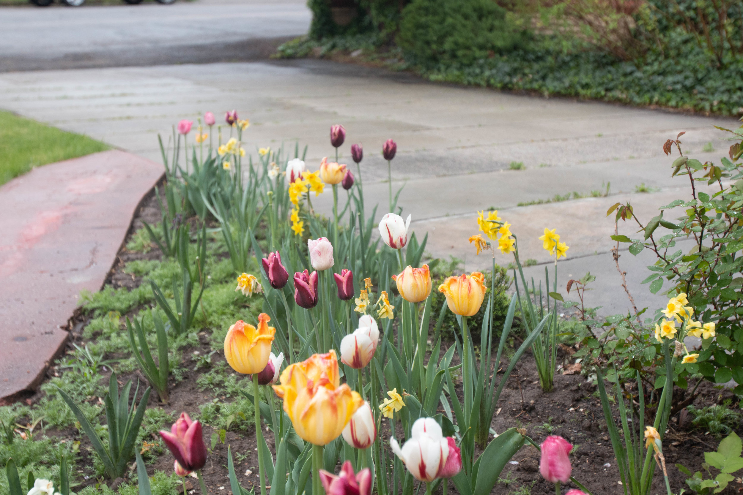 Mixed perennial super pack from Tulip World