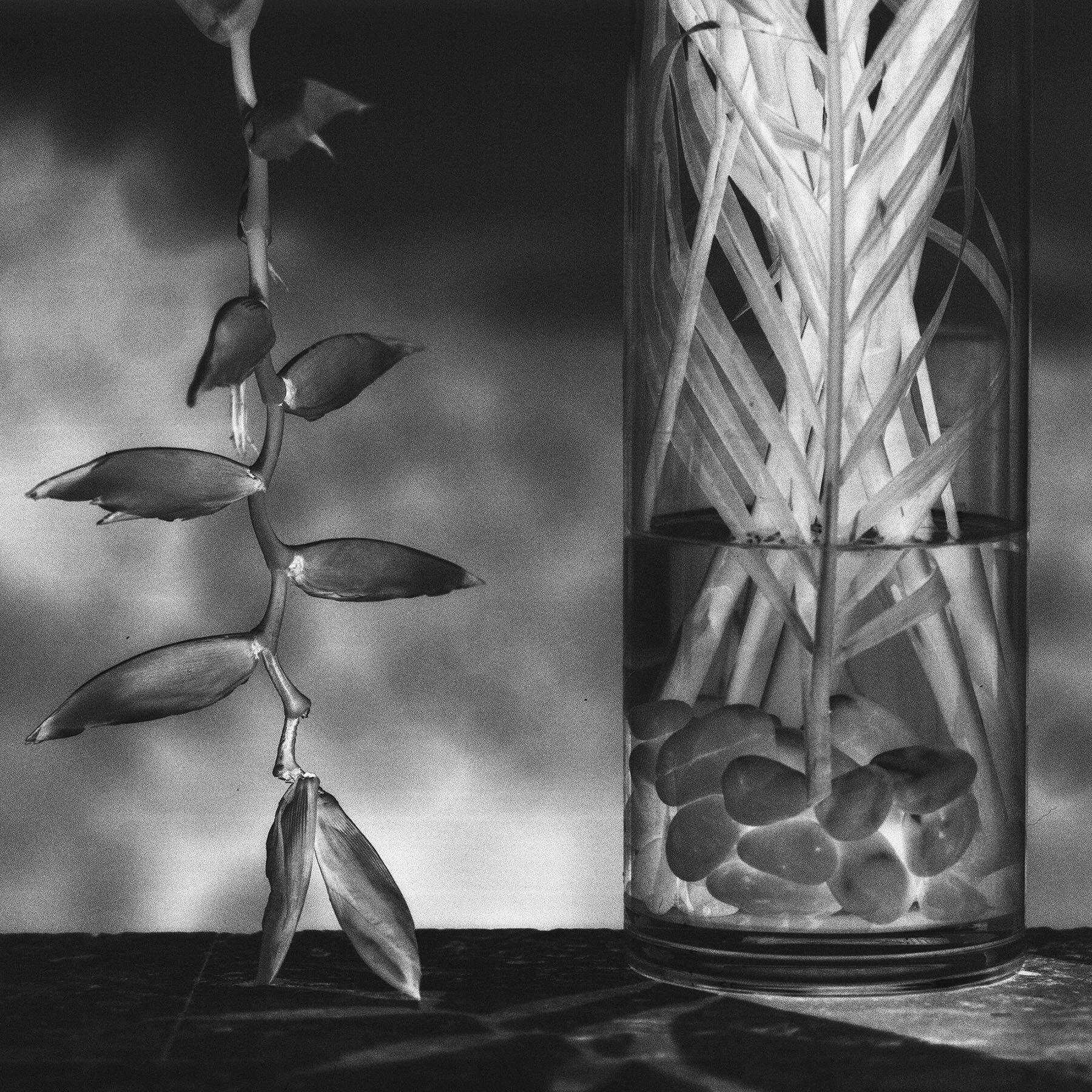 'Negative Still Life' 2014