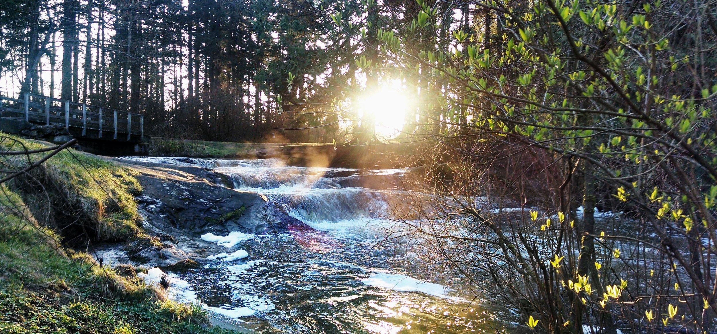 Good Morning Sunshine at Cornwall Park.jpg