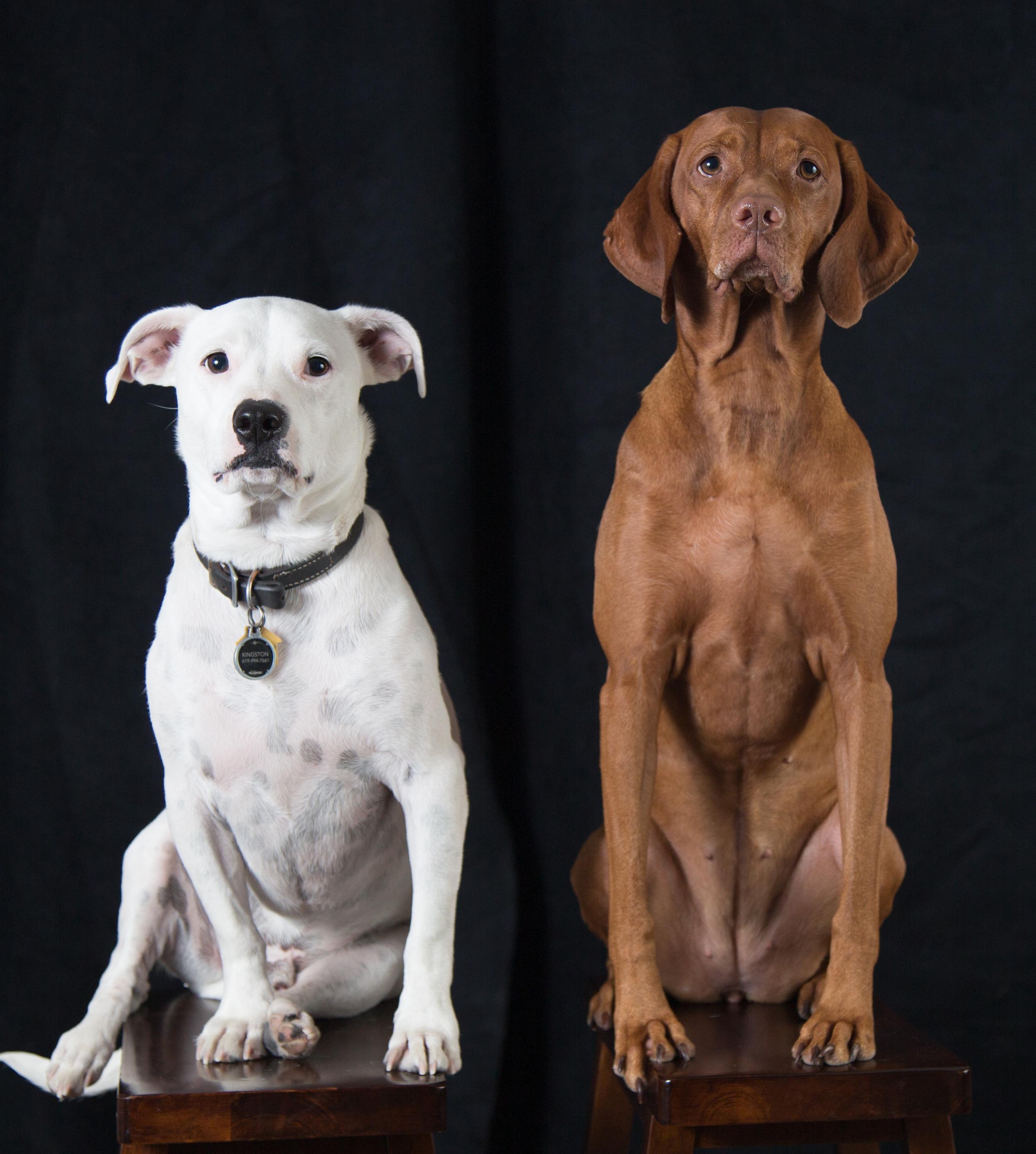 Flashandhound1
