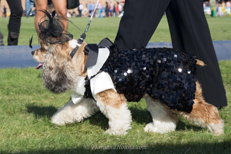 2016 AZ Polo Party Canine Couture Fashion show