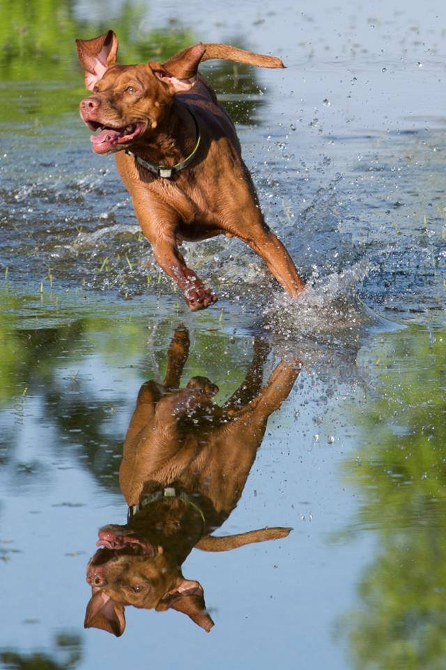 Dog_playing_in_water