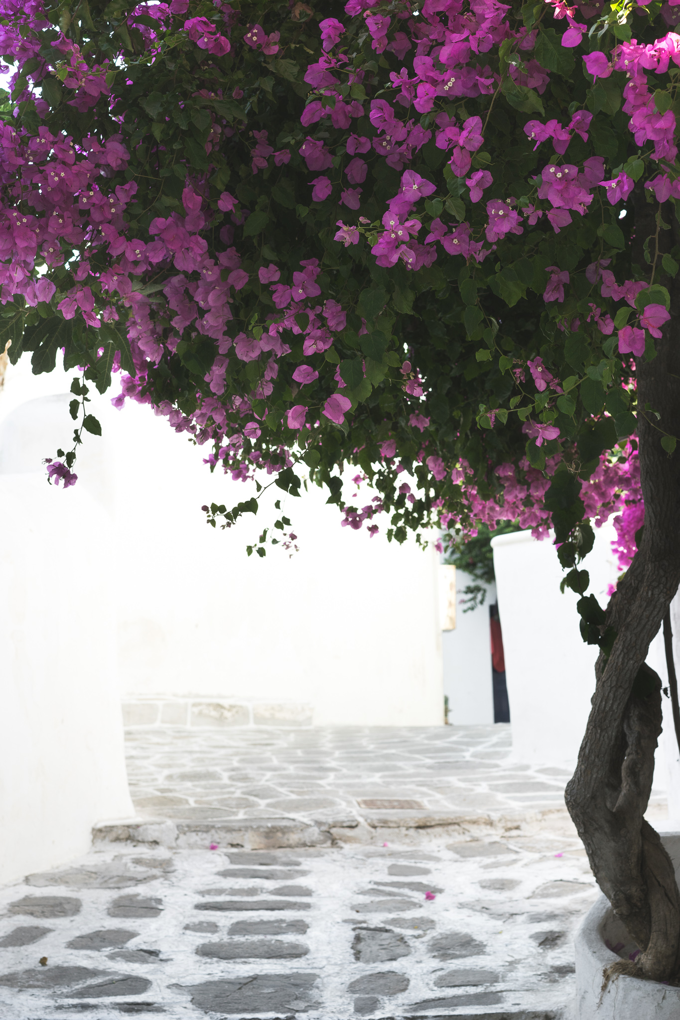 Mykonos-Greece-8.jpg
