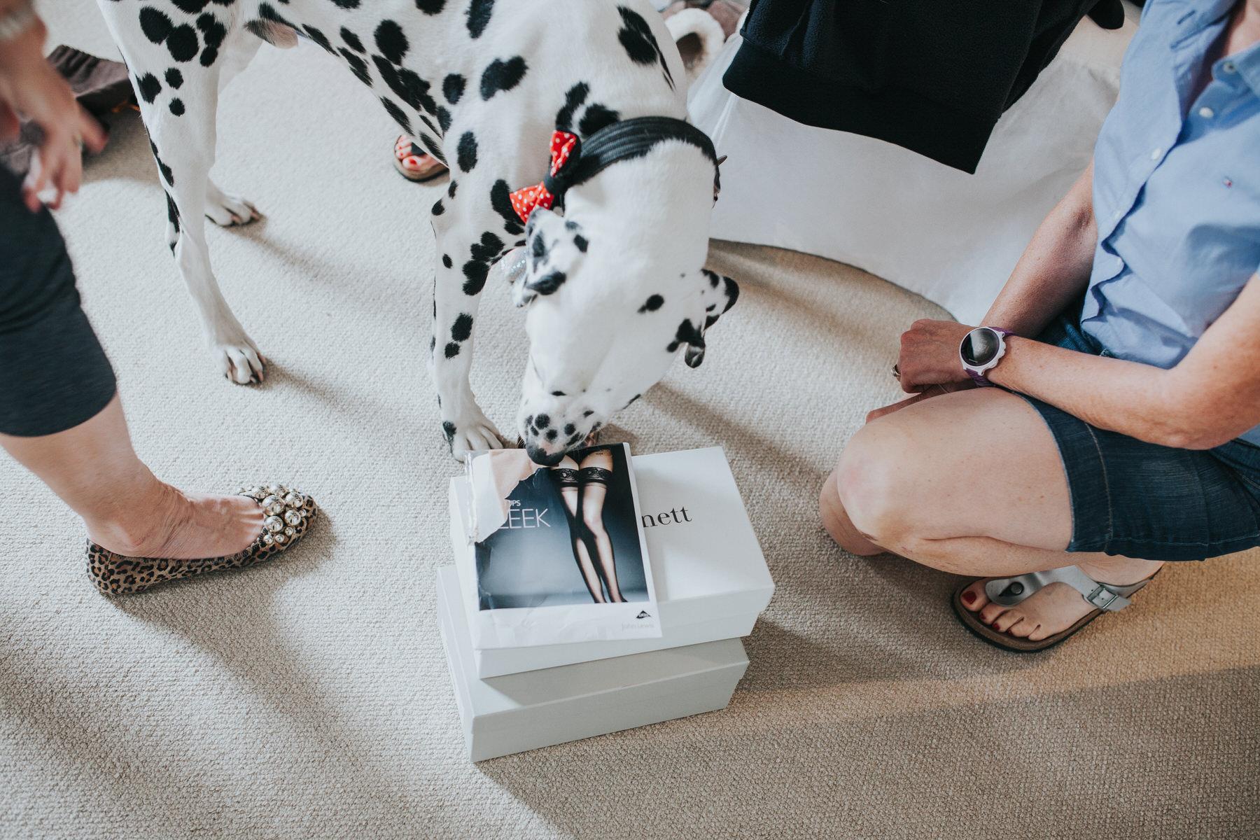 20 dalmatian sniffing stockings bridal prep London.jpg