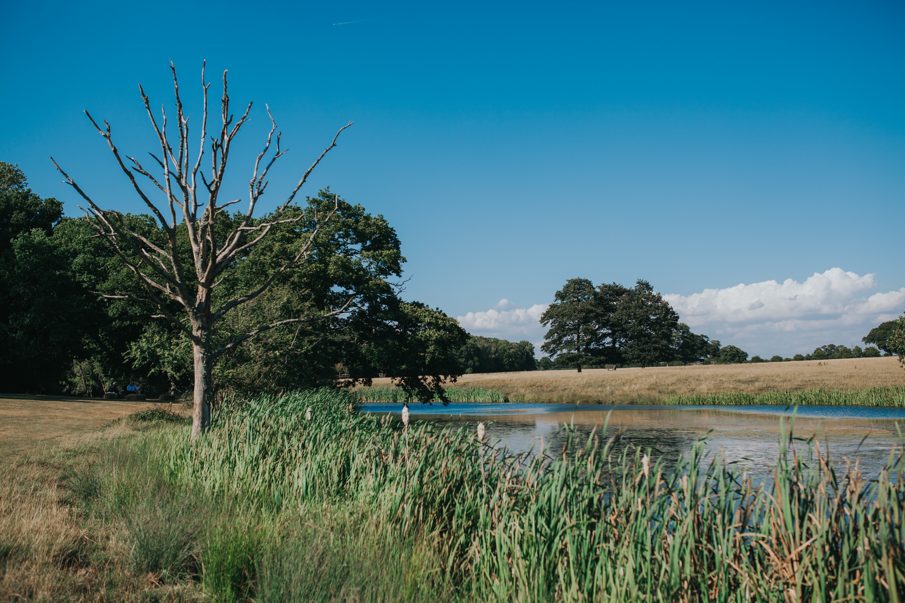 118 Knepp Castle lake landscape blue skies.jpg