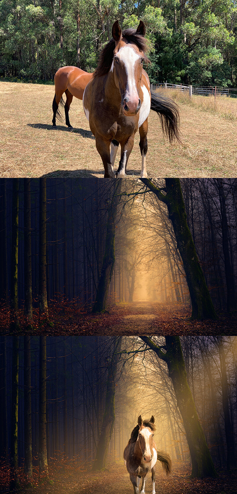 Bottom image was created by combining client's top image with a stock photo (by Johannes Plenio) and adding a shaft of light to work with the existing lighting on the horse.