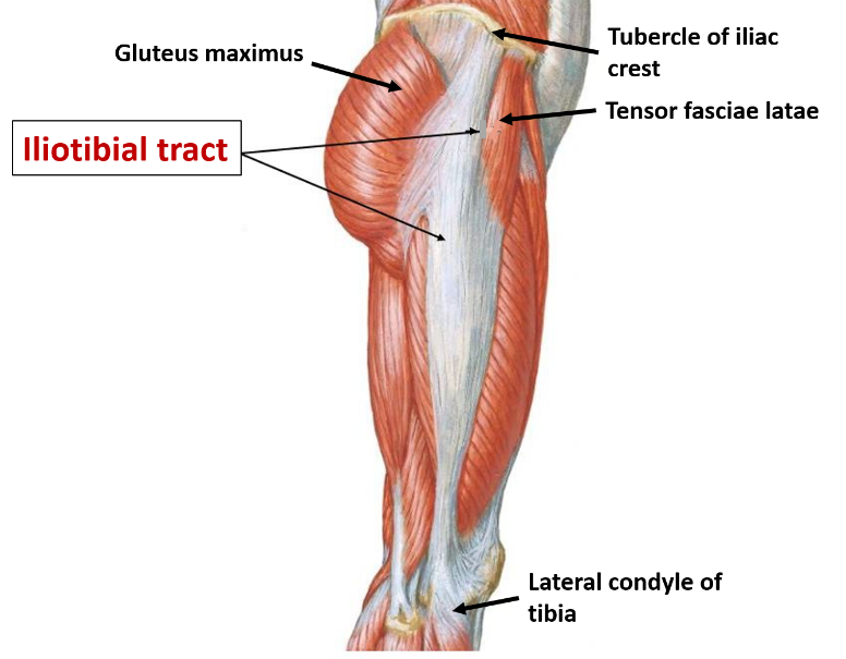 iliotibial-tract.png