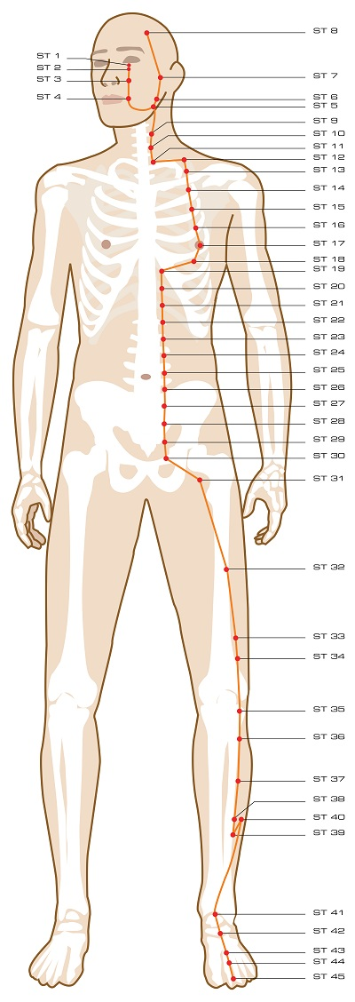 acupuncture-meridian-stomach.jpg