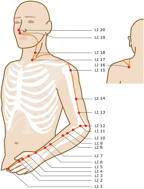 acupuncture-meridian-large-intestine.jpg