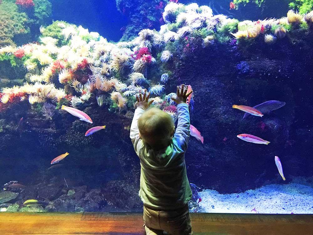 Rosie loved our visit to the  San Sebastián Aquarium.