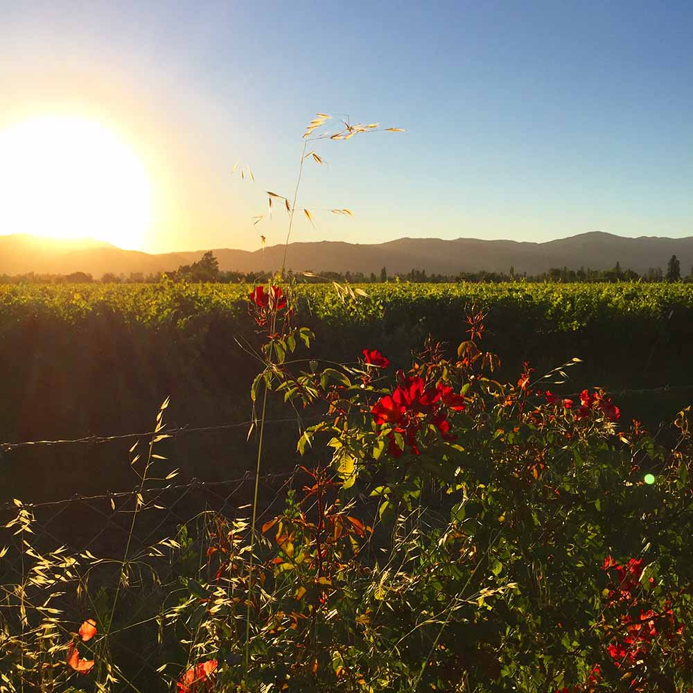 Sunset over the vineyards in the Colchagua Valley.