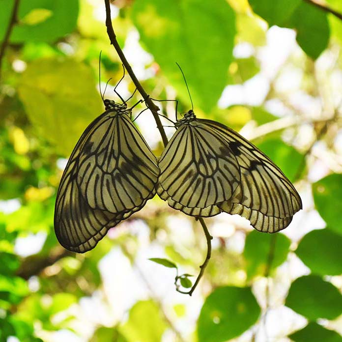 Matching butterflies at the Bali Butterfly Park.