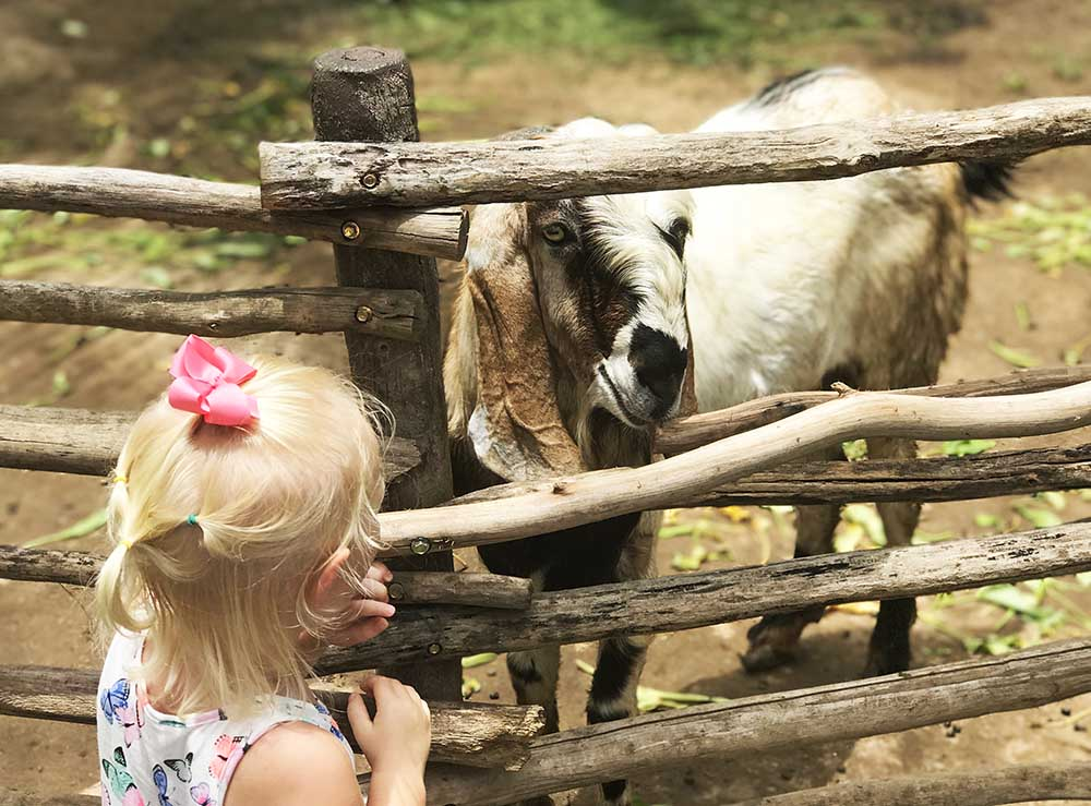 Conversations with goats...