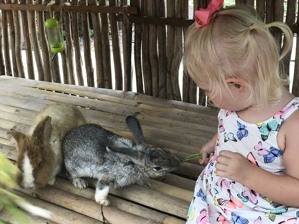 """Rosie's comfort toy is a grey rabbit affectionately known as Dirty Bunny. Getting to meet and feed """"real dirty bunny!"""" was a pretty awesome moment."""