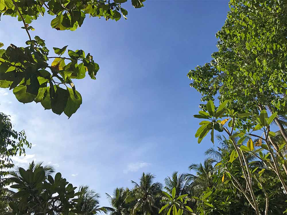 Looking up to the blue skies over Penida, surrounded everywhere on the island by lush tropical forests.