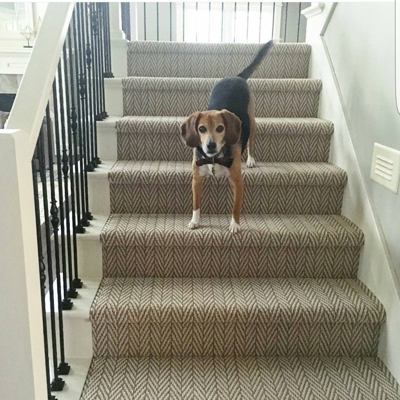 dog on stairs.jpg