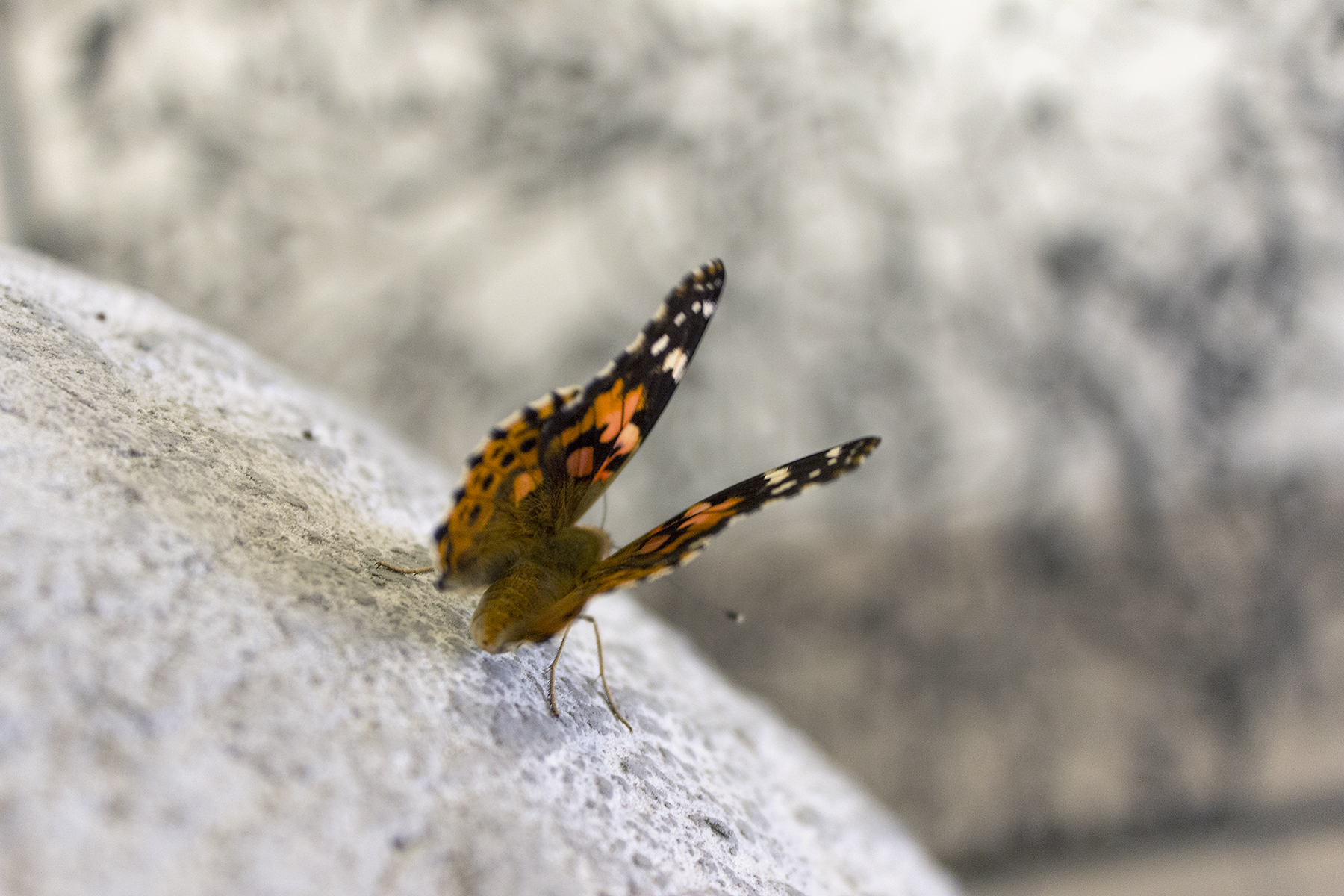 butterfly on planet taking flight.jpg