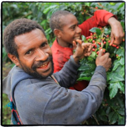 Coffee farmers in PNG