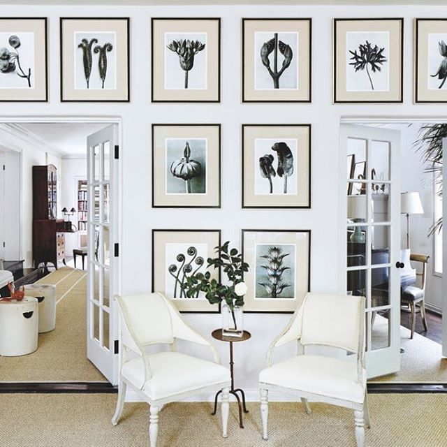 Modern classicism in a sunroom featuring the photography of Karl Blossfeldt . . . . . . #photography #art #contemporaryart #livingwithart #artcollection #interiordesign #interiordesigner #karlblossfeldt #naturemort #stilllife #blackandwhitephotography #artcollector #artadvisor #livingroom #sunroom #neutralpalette #neotrad #sochic #sofa #chair #natureprints #framing #gallerywall